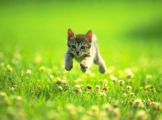 Klischee-Kätzchen